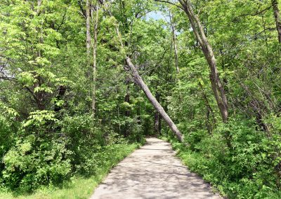 BuckinghamNorth_Path1